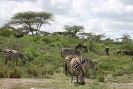 TZ-Serengeti_1512