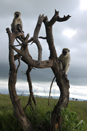 TZ-Serengeti_1512_monkey