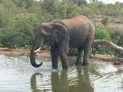 Sydafrika-19-elefant