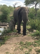 Sydafrika-20-elefant