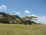 1-serengeti2