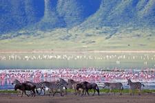 TZ-Ngorongoro-flamingo